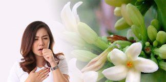 Hoa đu đủ đực chữa ho